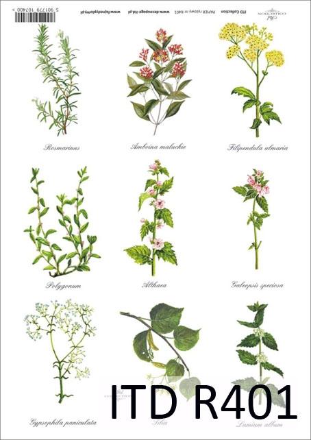 Полевые цветы нашего края и 18