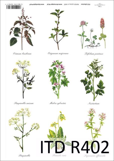 Одуванчик  описание с фото растения свойства и